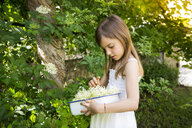 Little girl picking elderflowers - LVF07023