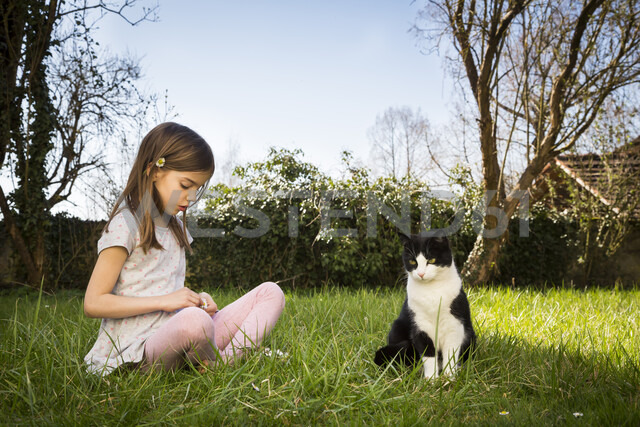 Little girl sitting on a meadow besides cat picking daisies - LVF07029