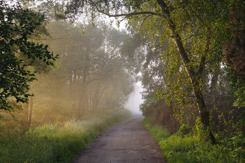 Germany, Bavaria, Swabia, Tussenhausen, forest path and morning fog, Augsburg Western Woods Nature Park - SIEF07787