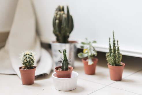 Potted succulent and cactus - AFVF00624