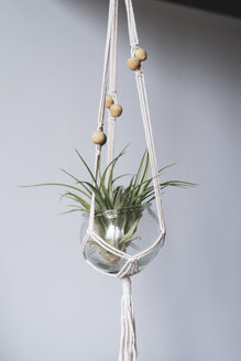 Air plant in glass - AFVF00627