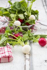 Red and white radish - LVF07037