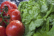 Close up of lettuce and vine tomatoes being washed - CUF28340