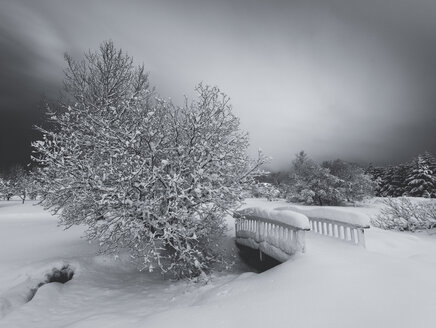 Snow covered bridge and trees against grey sky in botanical gardens, Reykjavik, Iceland - CUF30492