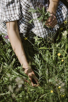 Italy, Veneto, Young woman plucking flowers and herbs in field, close up - ALBF00416