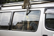 Uganda, Queen Elisabeth National Park, Curious vervet monkey climing on off-road vehicle - REAF00324