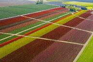 Aerial view of colorful tulip fields and paths - ISF09692