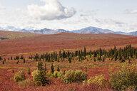 USA, Alaska, Denali National Park, Alaska Range in autumn - CVF00826