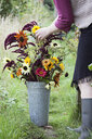 Cropped view of mature woman arranging flowers in bucket at allotment - CUF31748