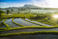 Rice fields, Bali, Indonesia - CUF32720