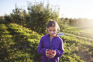 Girl in orchard holding apple looking down smiling - ISF11711