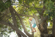Young boy climbing tree - ISF12197