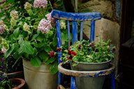 Flowers in metal busket, old wooden chair - GEMF02084