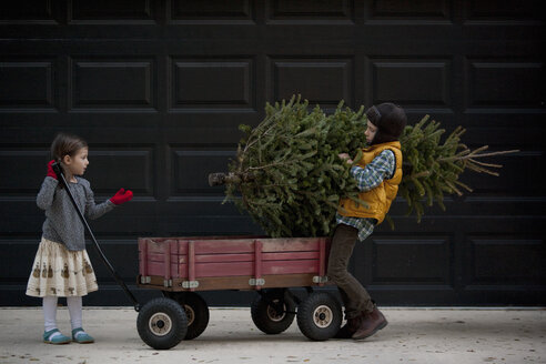Girl and boy loading cart with christmas tree - ISF12904
