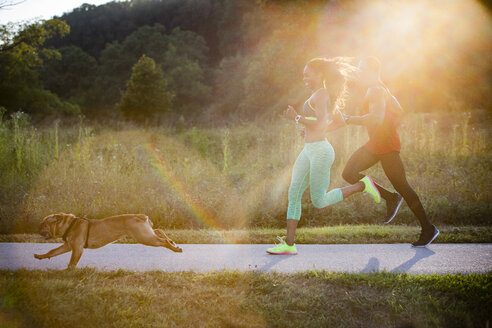 Young couple and dog running in sunlit in park - ISF13608