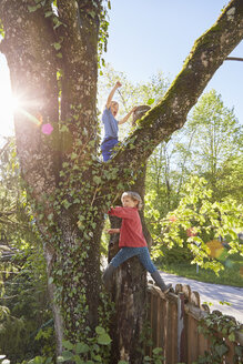 Two young boys climbing tree - ISF13725