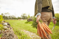 Mature woman outdoors, gardening, holding trowel and bunch of carrots, rear view, mid section - ISF13767