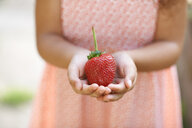 Cropped shot of girl holding a fresh strawberry in garden - ISF13797
