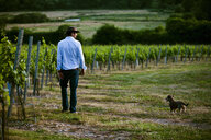 Mid adult man and dog monitoring wine and champagne vineyard, Cottonworth, Hampshire, UK - CUF33275