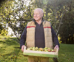 Senior man carrying crate of apples - CUF33553