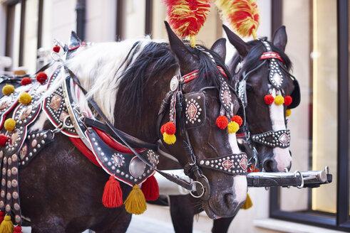 Poland, Krakow, two festive decorated horses - ABIF00643