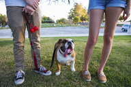 Portrait of bulldog in park between legs of young couple - ISF14202