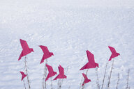 Origami birds sitting on grasses in winter - PSTF00133