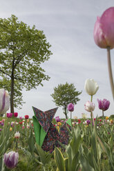 Origami fox in tulip field - PSTF00157