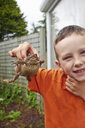 Portrait of young boy in garden holding up toad - CUF34723