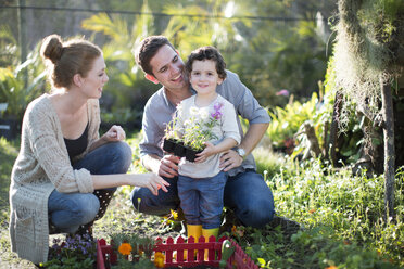 Couple and son planting miniature garden on allotment - CUF35743