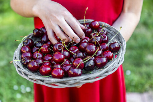 Girl holding basket of cherries, close-up - SARF03812