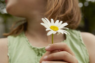 Cropped image of girl holding daisy flower - CUF36917