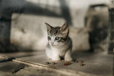 Kitten with green eyes - ACPF00057
