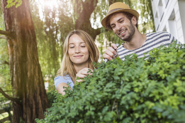 Young couple pruning bush in garden - CUF37742