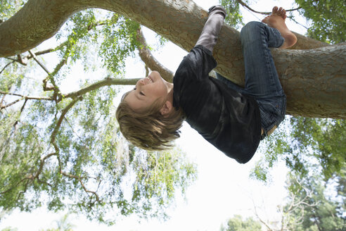 Upside down boy wrapped around tree branch - ISF14560