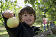 Portrait of a boy holding up freshly picked apple - ISF15201