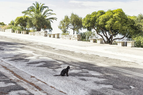 Greece, black cat sitting on road - MAMF00135