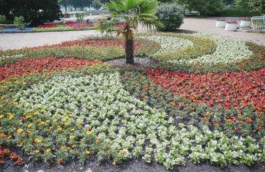 Blooming flowers in park - RHF02051