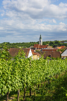 Austria, Lower Austria, Waldviertel, Wachau, Langenlois, Parish Church, vineyard - WWF04232