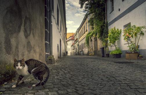 Austria, Steyr, cat on street, alley - EJWF00889