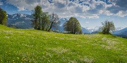 Germany, Bavaria, Allgaeu, Oberallgaeu, Allgaeu Alps, Illertal, Panoramic view from Malerwinkel - WGF01200