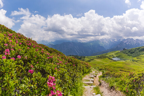 Germany, Bavaria, Allgaeu, Allgeau Alps, Fellhorn, view to Schlappolt Lake with Alpine roses next to hiking trail in the foreground - WGF01203