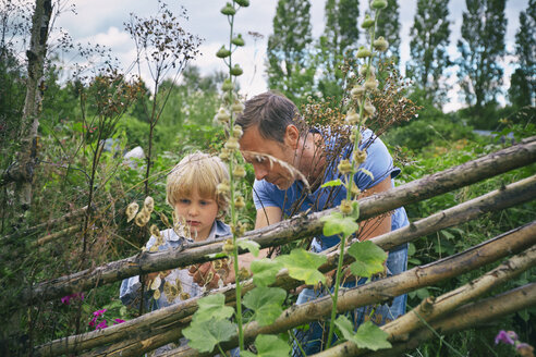 Father and son looking at plants on allotment - CUF38257