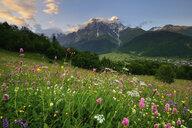 Meadow with wildflowers, Mazeri village, Svaneti, Georgia - CUF38476
