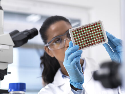 Female scientist preparing a multi well tray containing blood samples for clinical testing in the laboratory - ABRF00212