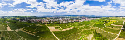 Germany, Rhineland-Palatinate, Ingelheim, Aerial view over vineyards - AMF05799