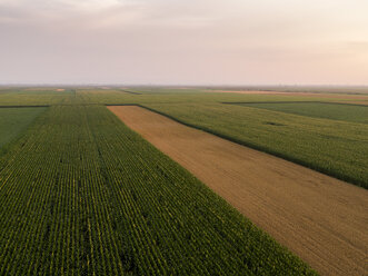 Serbia, Vojvodina, Aerial view of corn, wheat and soybean fields in the late summer afternoon - NOF00049