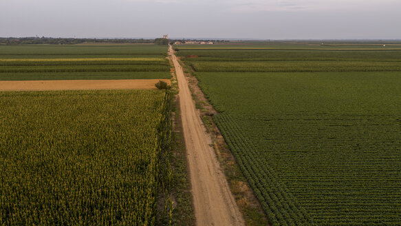 Serbia, Vojvodina, Aerial view of corn, wheat and soybean fields in the late summer afternoon - NOF00055