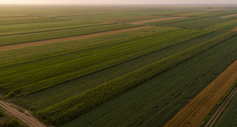 Serbia, Vojvodina, Aerial view of corn, wheat and soybean fields in the late summer afternoon - NOF00058