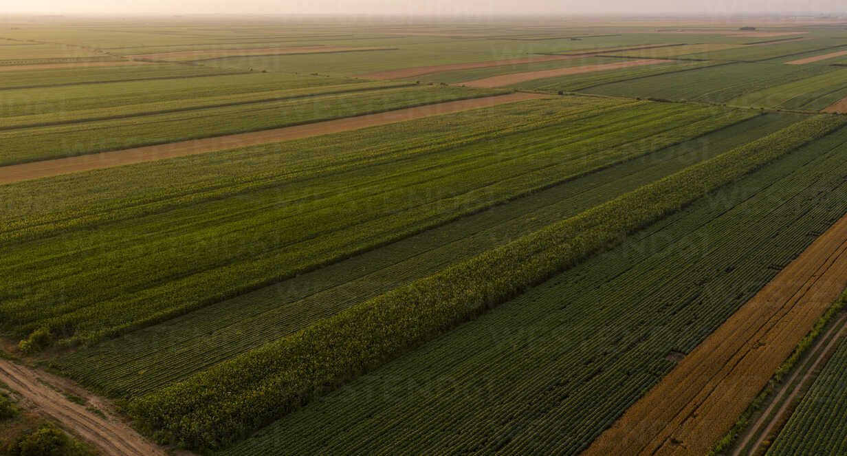 Serbia, Vojvodina, Aerial view of corn, wheat and soybean fields in the late summer afternoon - NOF00058 - oticki/Westend61